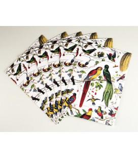 Lot de 10 cartes doubles - Les Oiseaux
