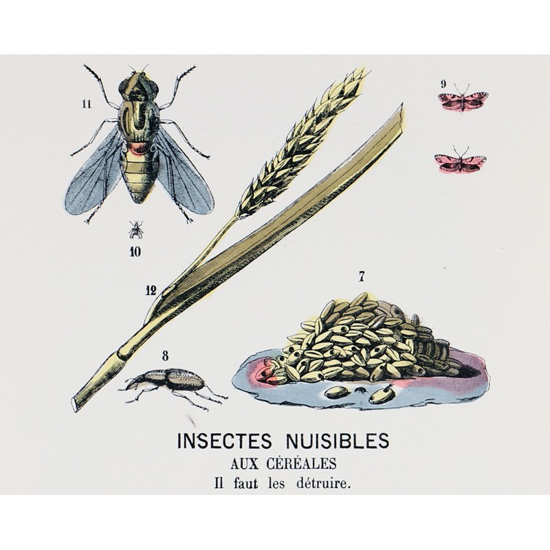 Insectes nuisibles maison images d 39 pinal for Animaux nuisibles maison