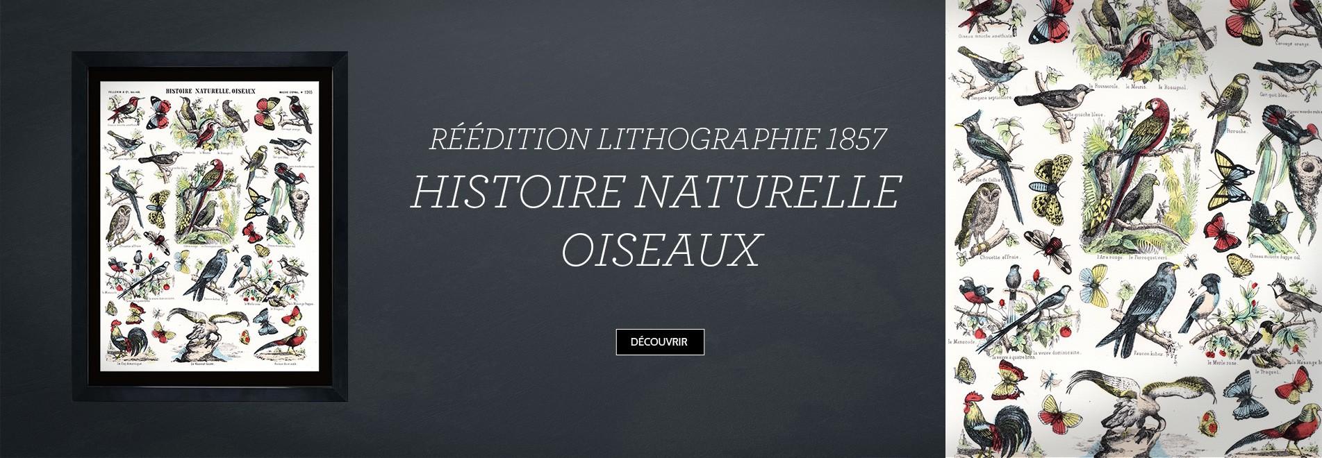 REEDITION LITHOGRAPHIE 1857 – HISTOIRE NATURELLE OISEAUX